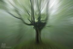 The trip (Hector Prada) Tags: trip viaje tree primavera fog forest arbol spring zoom bosque niebla paisvasco hectorprada