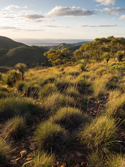 the rounded, spiny sea (liam.jon_d) Tags: australia australian australiannationalpark billdoyle dutchmans dutchmansstern dutchmanssternconservationpark evening flinders flindersranges landscape lastlight mallee mountain nationalpark range sa southaustralia southaustralian sunset theflinders triodia pickmeset