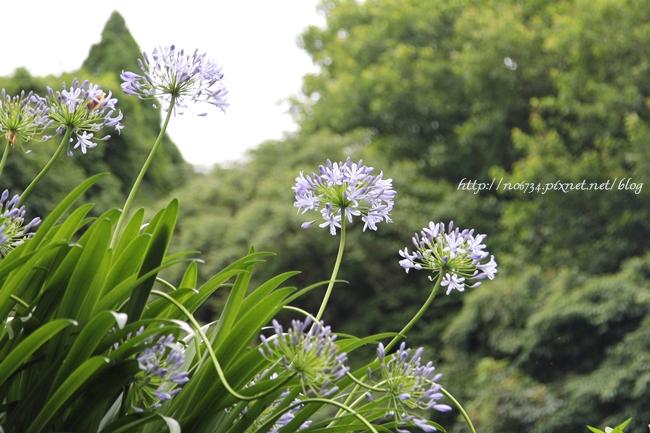 20110612_YangMingMtFlowe_0376 f
