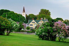 """Lilac Festival""  Mackinac Island , Michigan (Michigan Nut) Tags: park travel usa church nature fence geotagged purple michigan lawn peaceful lilacfestival bushes mackinacisland lilacs syringa michiganstateparks whitelilacs purplelilacs oldfashionedlilacs nikonnikkor70300mmf4556gedifafsvrtelephotozoomlens saintannescatholicchurch"