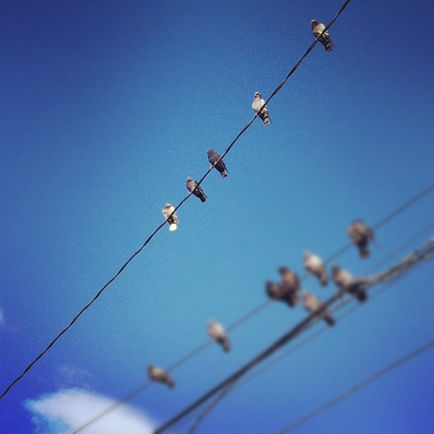 High-wire ACT #birds