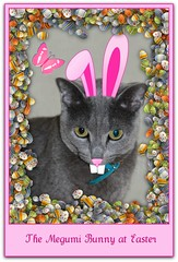 The Megumi Bunny at Easter (martian cat) Tags: macro easter 200 100 russianblue megumi motivationalposter martiancatinjapan allrightsreserved diamondclassphotographer flickrdiamond martiancatinjapan martiancatinjapan