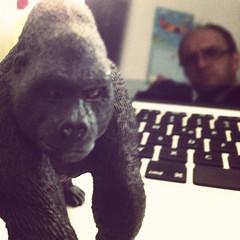 The Gorilla and me (-masru-) Tags: me self computer tiere martin gorilla familie utata ape projects selbstportrait kaiserslautern weekendproject affen affe projekte meinthemirror instagram utata:project=meinmirror