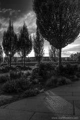The Park (Joel Meaders) Tags: park trees sunset blackandwhite colorado unitedstates dusk denver hdr thecommons 16thstreetmall vivitarseries11935mm commonspark canoneos50d