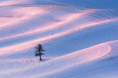 Palouse Winter Hills and Lone Tree (Ryan McGinty) Tags: pink blue winter snow sunrise landscape idaho rollinghills lonetree palouse ryanmcginty