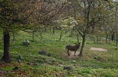 hello petit âne :-)