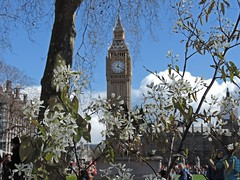 Parliment Square (DncnH) Tags: london westminster spring dof blossom housesofparliament bigben parliamentsquare