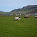 "2014 04 - Irlanda-83.jpg • <a style=""font-size:0.8em;"" href=""http://www.flickr.com/photos/35144577@N00/14108398121/"" target=""_blank"">View on Flickr</a>"