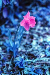 "Test Lomo Purple XP 100-400 mit Minolta 7000 • <a style=""font-size:0.8em;"" href=""http://www.flickr.com/photos/58574596@N06/14195615860/"" target=""_blank"">View on Flickr</a>"