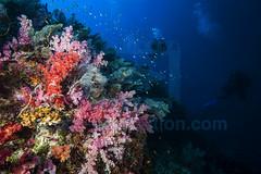 2013 12 BARATHIEU Mayotte 3519