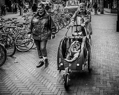Taking the dog for a walk. (erikvdlinden) Tags: ifttt 500px amsterdam netherlands adorable bw black white bulldog candid shot cute dog lovable mammal man one animal pedestrian street pet photography shopping sweet two people ugly walking woman transportation system carriage monochrome pavement vehicle group