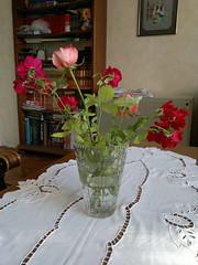 2016-09-27-7065 (vale 83) Tags: roses nokia n8 colourartaward