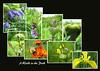 A Walk in the Park (wheehamx) Tags: park flower macro bee eglinton ixus55