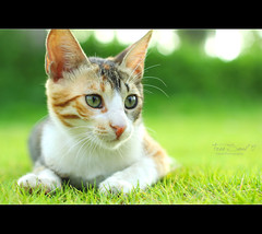 Free Soul  (Faisal | Photography) Tags: cute green colors cat canon garden dof bokeh 14 free soul usm 50  canonef50mmf14usm 50d canoneos50d faisal|photography