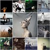 Favorite Friday - Week 1 (Casey David) Tags: favorite collage follow series bestofthebest amazingphotographers followfriday favoritefriday caseydavid