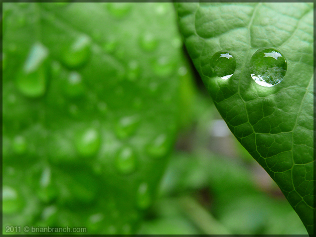 P1150897_blueberry_plant