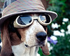 The Floyd (Paguma / Darren) Tags: dog hat goggles hound fedora floyd doggles