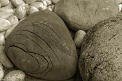 IMG_1327.jpg (Marco Uliana - Scarab) Tags: macro bn pietre sassi pietra biancoenero composizione dettaglio protezione presolana dorga bratto avvolgente castionedellapresolana avvolgere