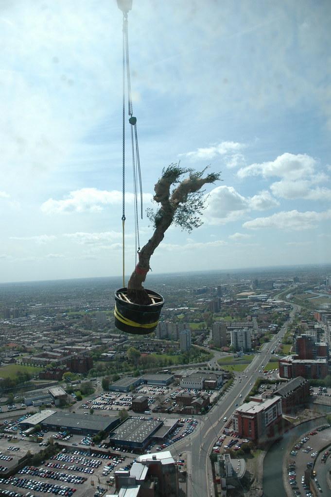 Landscape Projects Hilton Penthouse