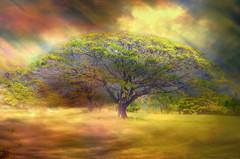Hawaiian Tree (Artypixall) Tags: trees texture landscape hawaii getty faa