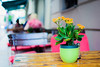flowers in berlin (Tafelzwerk) Tags: street flower berlin colors 35mm vintage table stillleben nikon pflanze oldschool depthoffield f18 blume tisch holz bunt stühle farben schärfentiefe strase d7000 tafelzwerk
