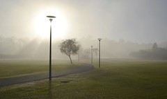 Good morning misty morning (RadamesM) Tags: park morning parque sun mist sol paran fog curitiba neblina manh barigui nvoa parquebarigui