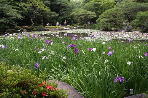 白虎池の花しょうぶ