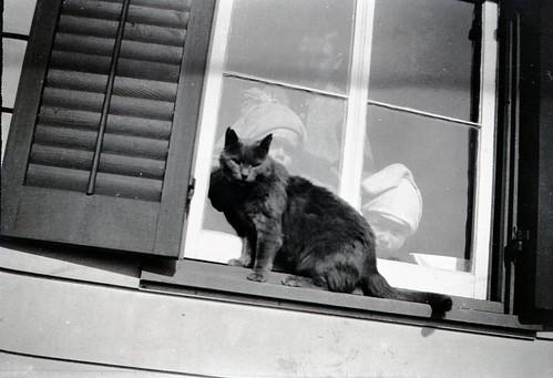1920s portrait blackandwhite bw black window fashion animal cat vintage 1930s newjersey clothing nj negative 1910s photoalbum