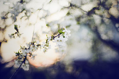 Blossom. (katarrri) Tags: blue light sunset sun white yellow cherry spring warm soft blossom bokeh