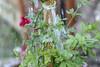 watering time (Antonio Almeida) Tags: f2 58mm 442 preset hellios