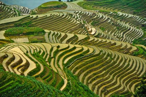 [フリー画像] 自然・風景, 田畑・農場, 中華人民共和国, 棚田, 201106281300