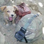NOWZAD DOGS FUNDRAISER (Lady Of The Hounds) Tags: