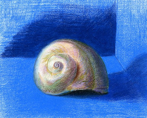 another shell in colored pencil