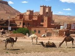 camels and kasbah, Southern Morocco (Kristel Van Loock) Tags: morocco maroc marocco camels marokko kasbah kamelen lemaroc southernmorocco zuidmarokko maroccodelsud