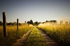 Path (96dpi) Tags: summer nature field rural fence landscape path sommer snapshot feld zaun pfad gettygermanyq2