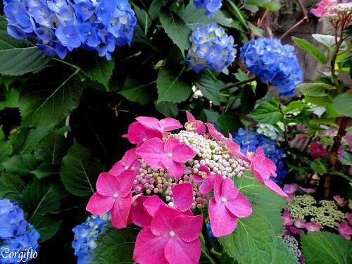 blog-110703-Jardin-9