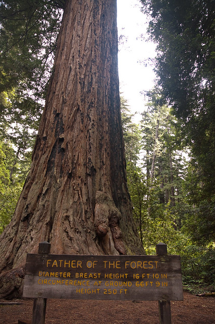 Big Basin Father of Forest Bottom