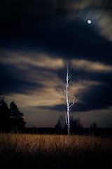 Easter full moon (morten almqvist) Tags: moon tree field night dark long exposure republic czech sigma full m42 flashlight flektogon birch sd14 jilovice