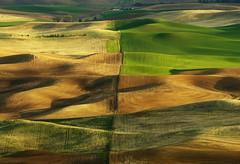 The Divide (campviola) Tags: evening spring shadows northwest farm farming patchwork rollinghills eveninglight wh wheatfields farmlife palouse steptoe steptoebutte 3398 rollinglandscape 7149334405jpg
