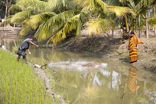 Fish farmers at work, Bangladesh. Photo by Samuel Stacey, 2012