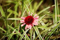 1 (Kristen Laudick) Tags: pink flowers red summer stilllife orange green nature floral garden spring plantlife