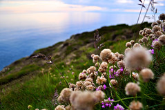 Scotland and Ireland (overgraeme) Tags: flowers ireland sea sun blur macro reflection green water grass evening coast scotland countryside path walk thistle united country north kingdom belfast northsea graeme british law portpatrick dumfries galloway waterscape cliffside overgraeme