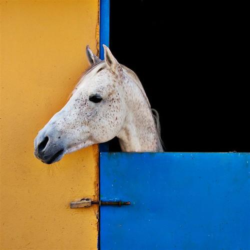 un caballo tordo