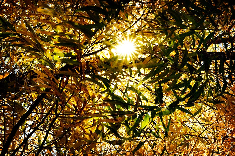 sunlight through fall leaves