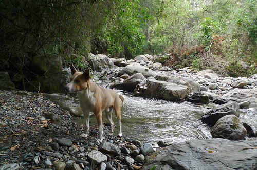 Our dog for the day - Vilcabamba, Ecuador