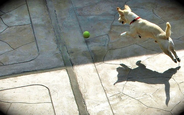 Benjamin Yach Playing Fetch