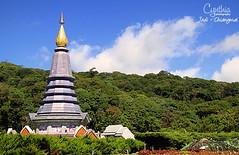 Jedi - Chiangmai (2)