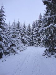 Waldweg im Advent (James Bimmel) Tags: schnee winter advent sony feld dezember wald tanne dscw380