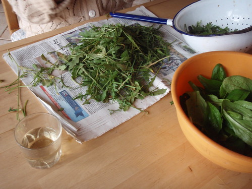 Rucola from my grandmorther's garden