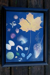 Shadow Box (Dawn Suzette) Tags: shadowbox giftsfromnature naturecraft themagnifyingglass naturefromnovascotia
